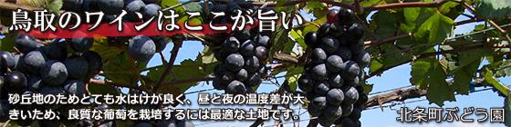 「鳥取のワイン」のタイトル画像